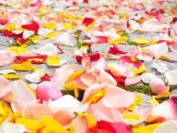 Rosebuds- Pixabay